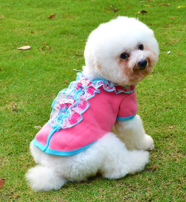 荷叶边领子衫超可爱比熊泰迪必备小狗宠物