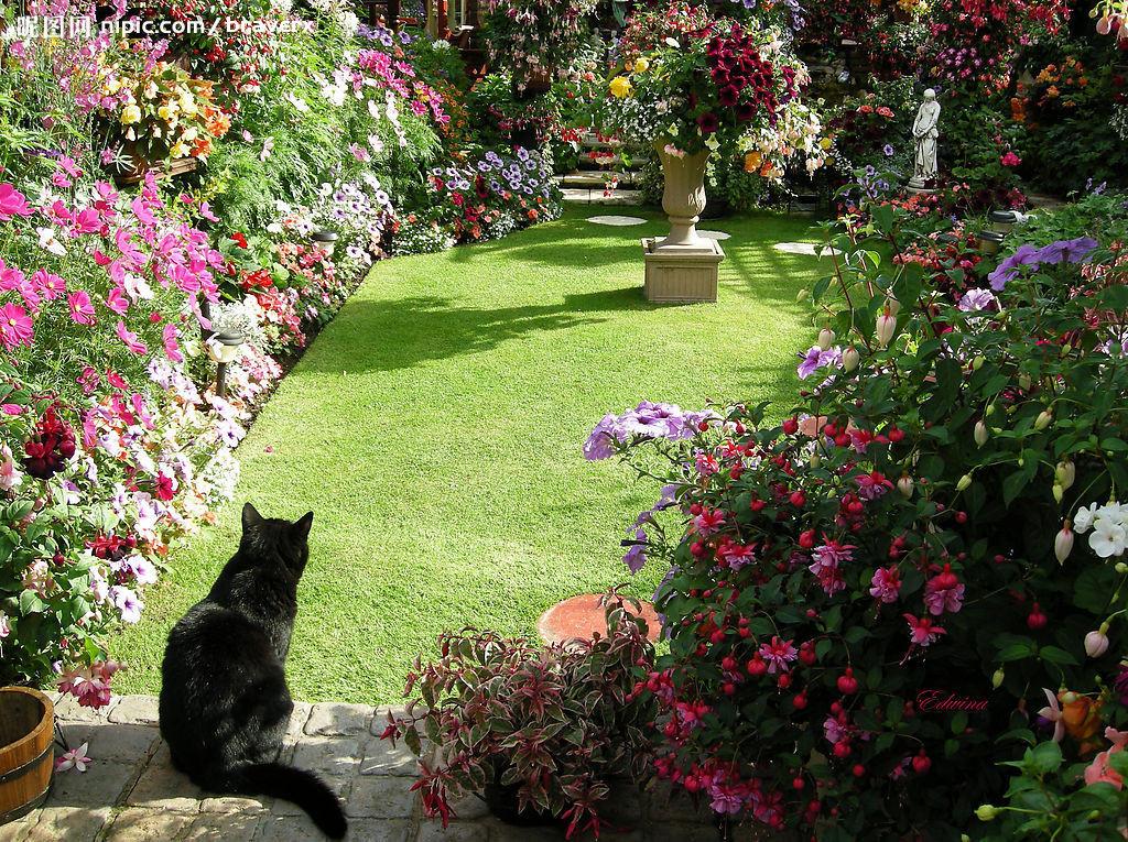花园# 可爱的小猫咪看风景