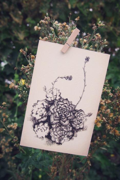 这种单色手绘风格的复古多肉明信-来自蘑菇街优店