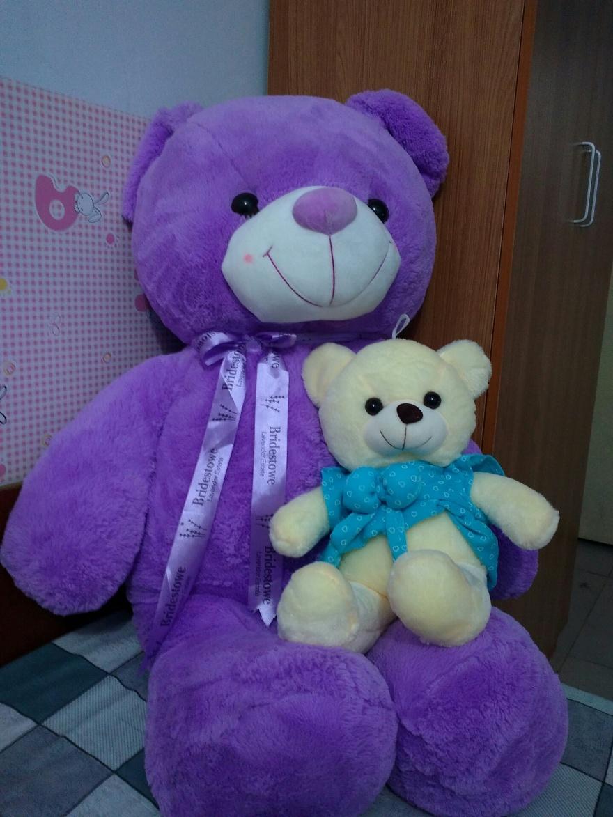 可爱的熊熊