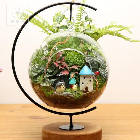 植物生态瓶设计图分享展示