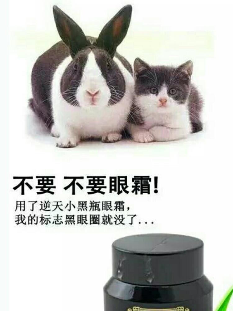 壁纸 动物 猫 猫咪 小猫 桌面 750_999 竖版 竖屏 手机