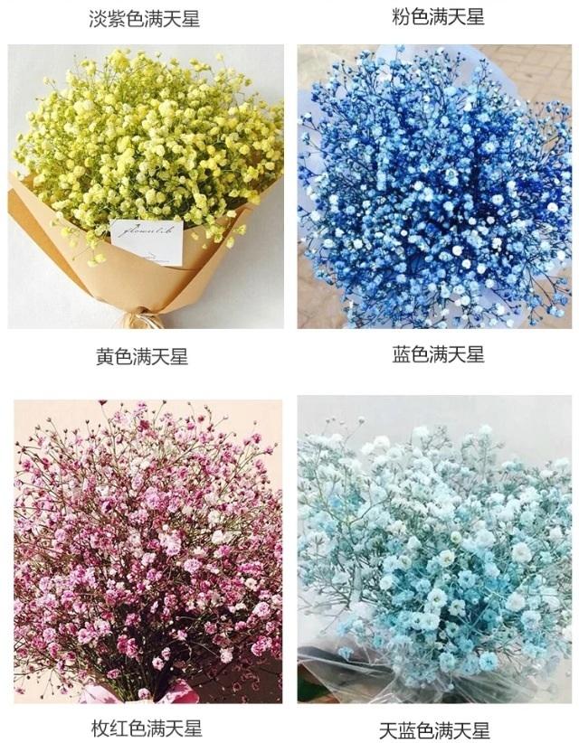 花种子满天星雏菊30粒盆栽植物